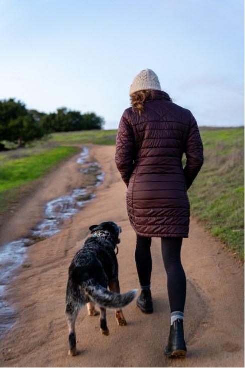 Walk Dogs For Money